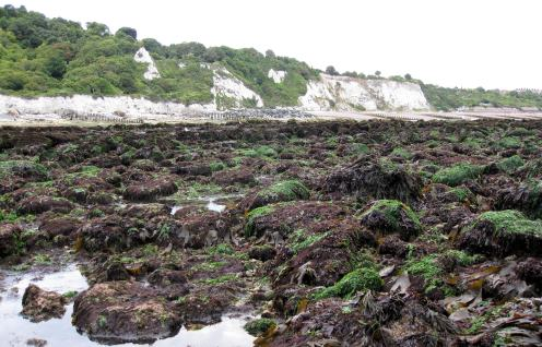 Seaweed covered rockpools