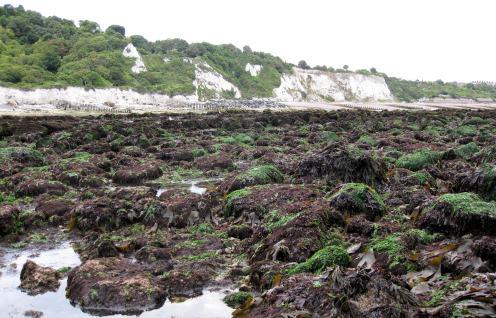 Seaweed covered rockpools